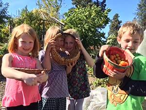 Harvesting veggies!