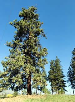 MVSD Campus Trees